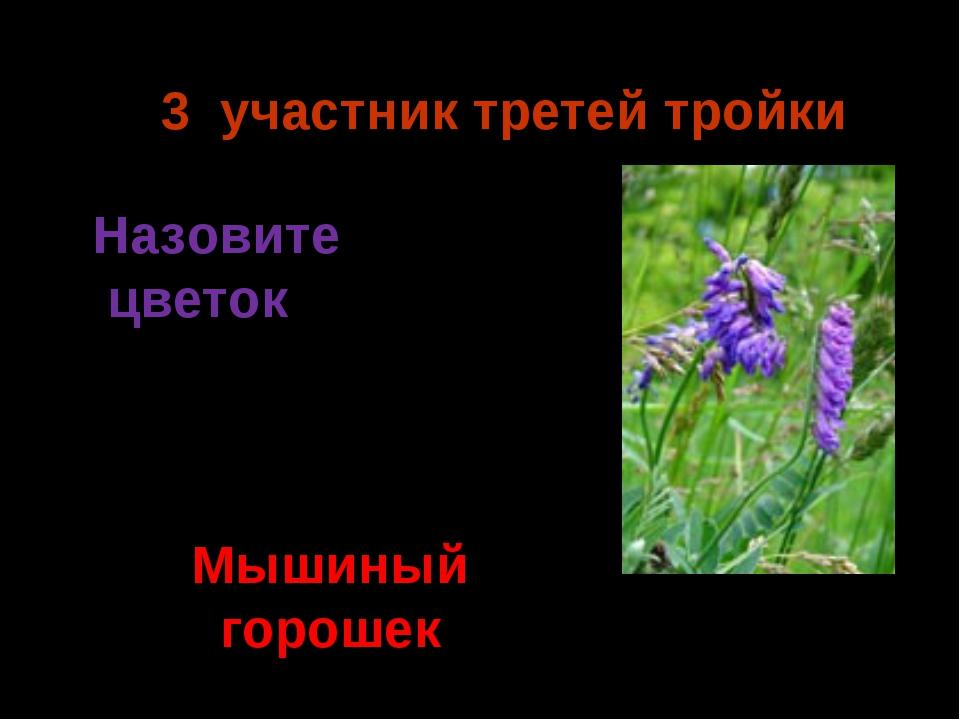 3 участник третей тройки Мышиный горошек Назовите цветок Ермия 2014