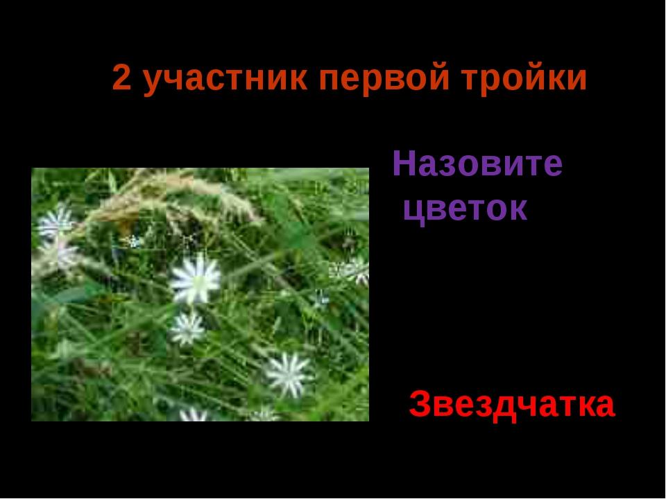 2 участник первой тройки Звездчатка Назовите цветок Ермия 2014