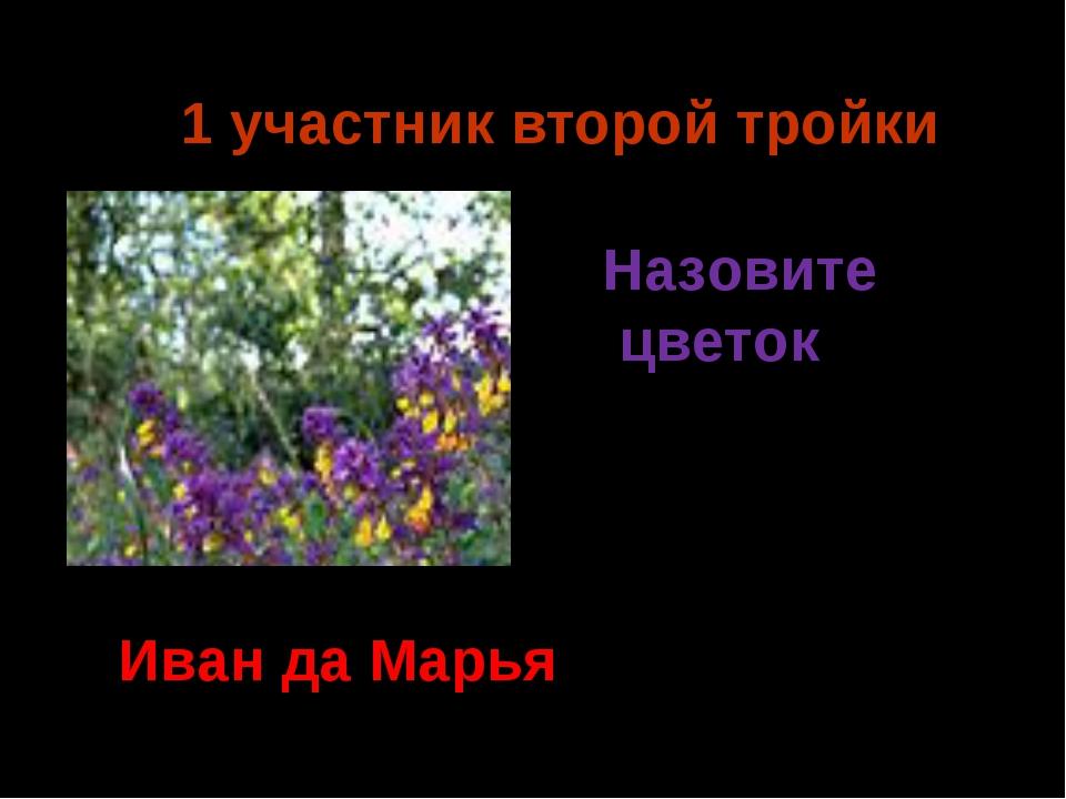 1 участник второй тройки Иван да Марья Назовите цветок Ермия 2014