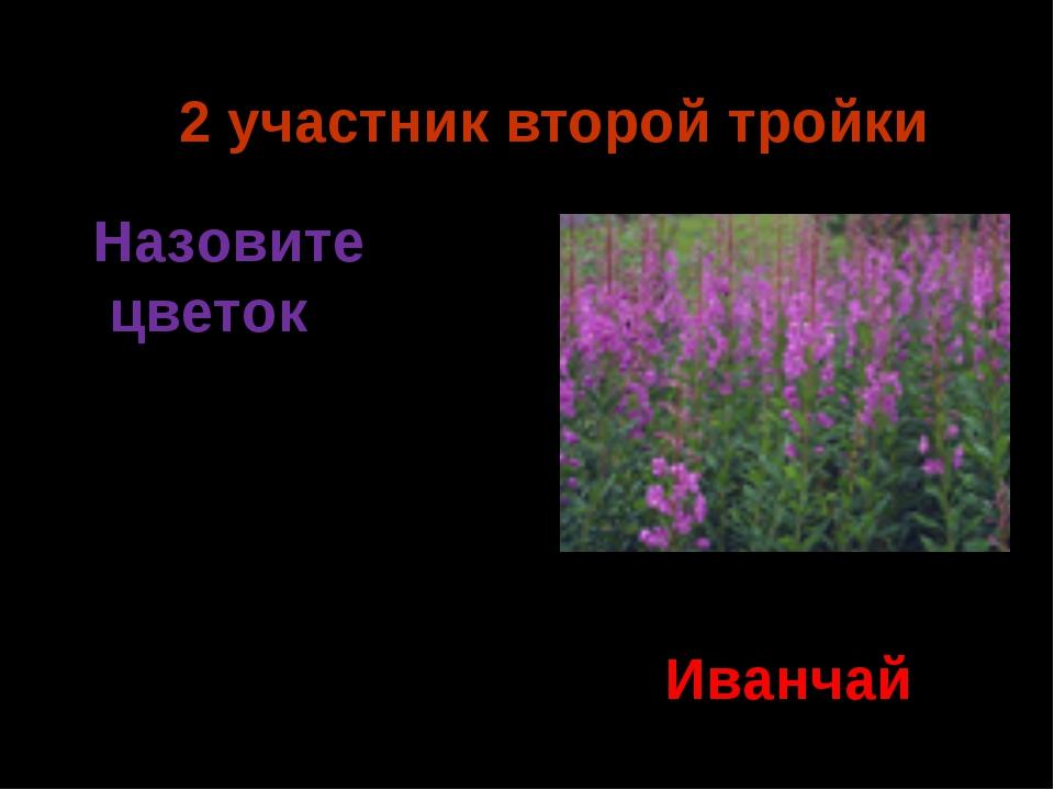 2 участник второй тройки Иванчай Назовите цветок