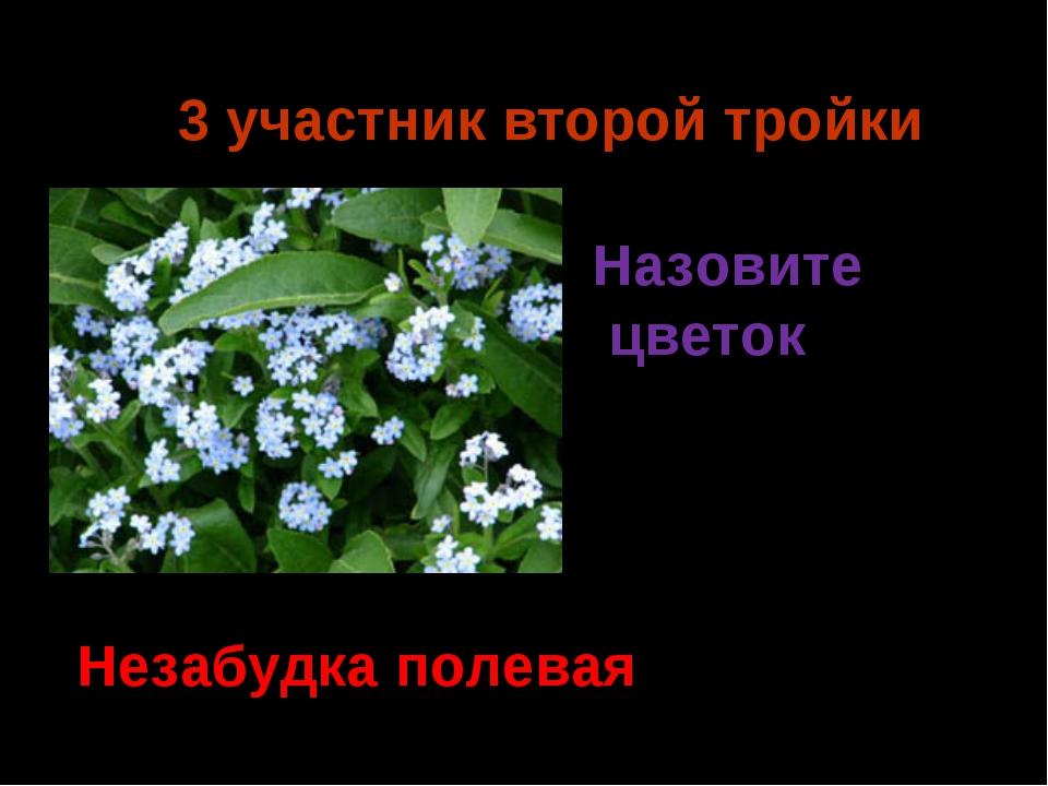 3 участник второй тройки Незабудка полевая Назовите цветок Ермия 2014