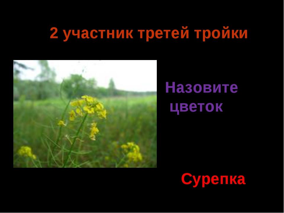 2 участник третей тройки Сурепка Назовите цветок Ермия 2014