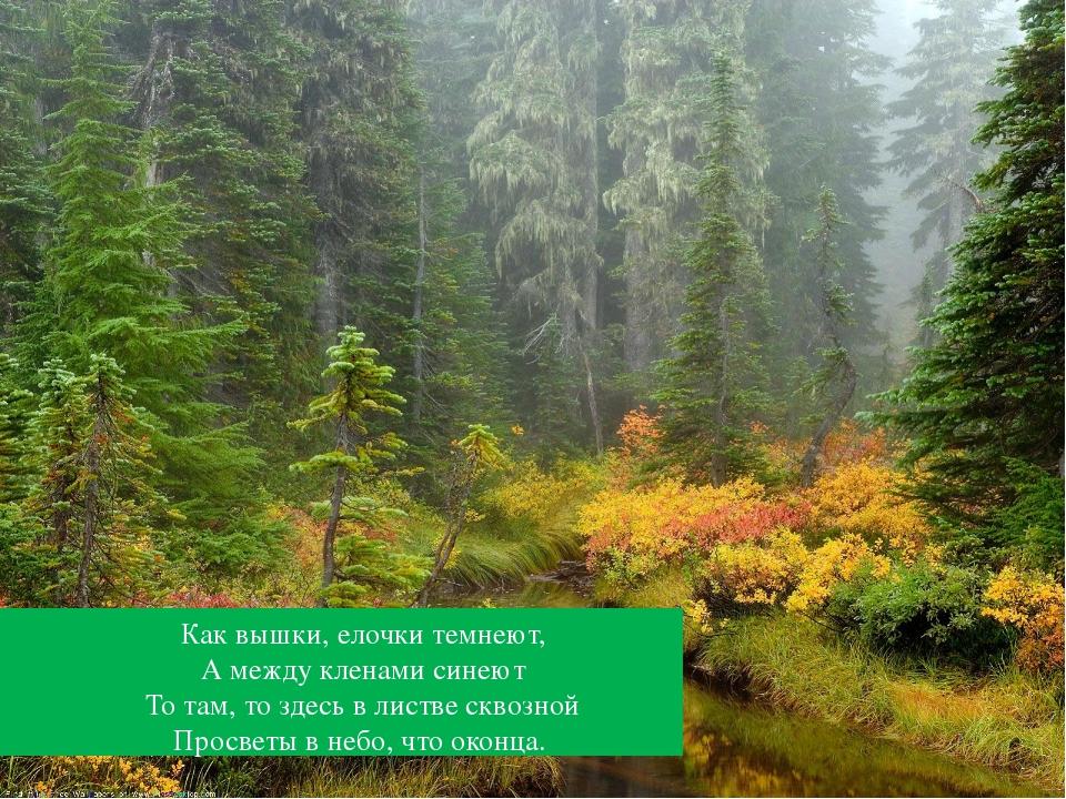 Как вышки, елочки темнеют, А между кленами синеют То там, то здесь в листве...