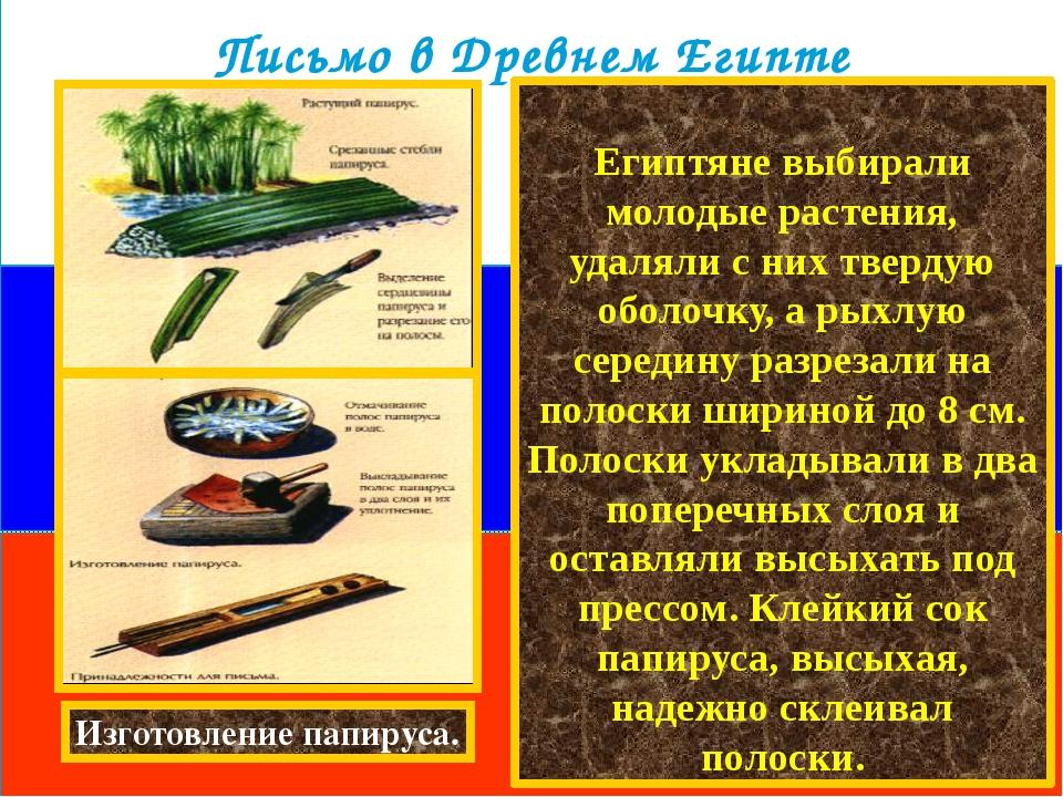 Египтяне выбирали молодые растения, удаляли с них твердую оболочку, а рыхлую...