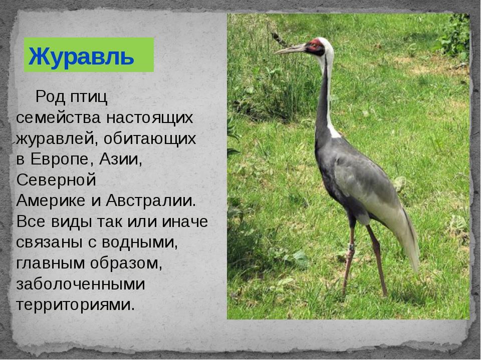 Род птиц семействанастоящих журавлей, обитающих вЕвропе,Азии, Северной Ам...