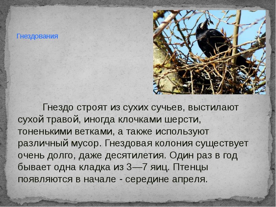 Гнездо строят из сухих сучьев, выстилают сухой травой, иногда клочками шерст...
