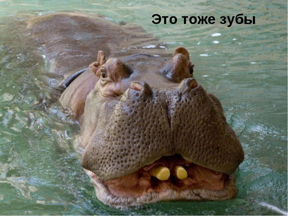 Это тоже зубы