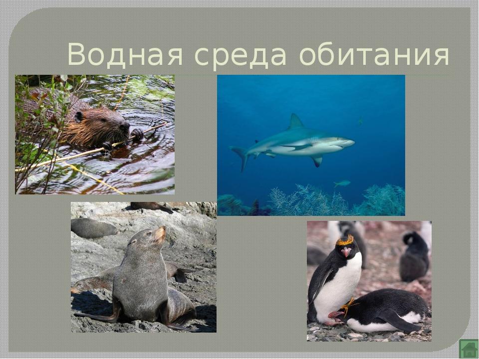 Организменная среда обитания