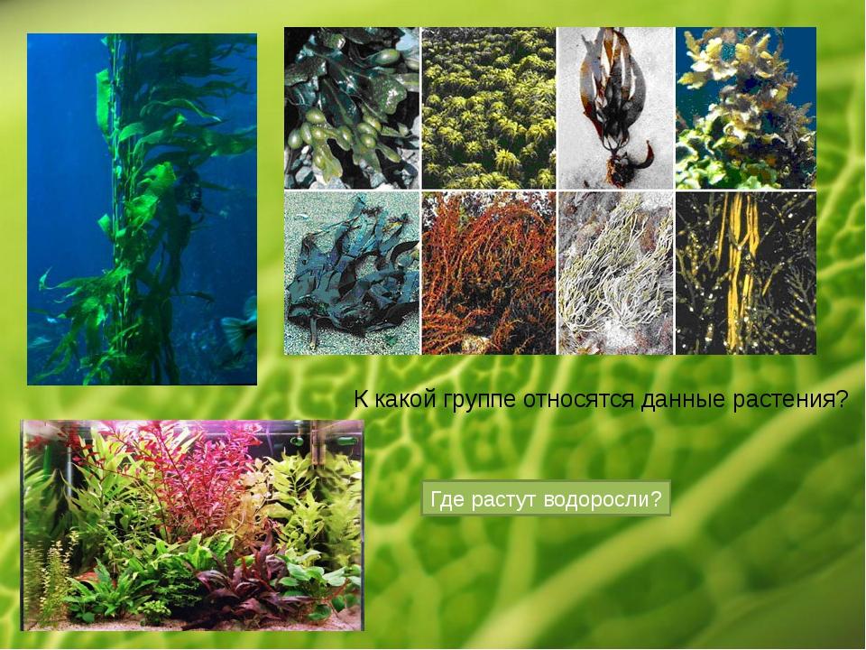 К какой группе относятся данные растения? Где растут водоросли?