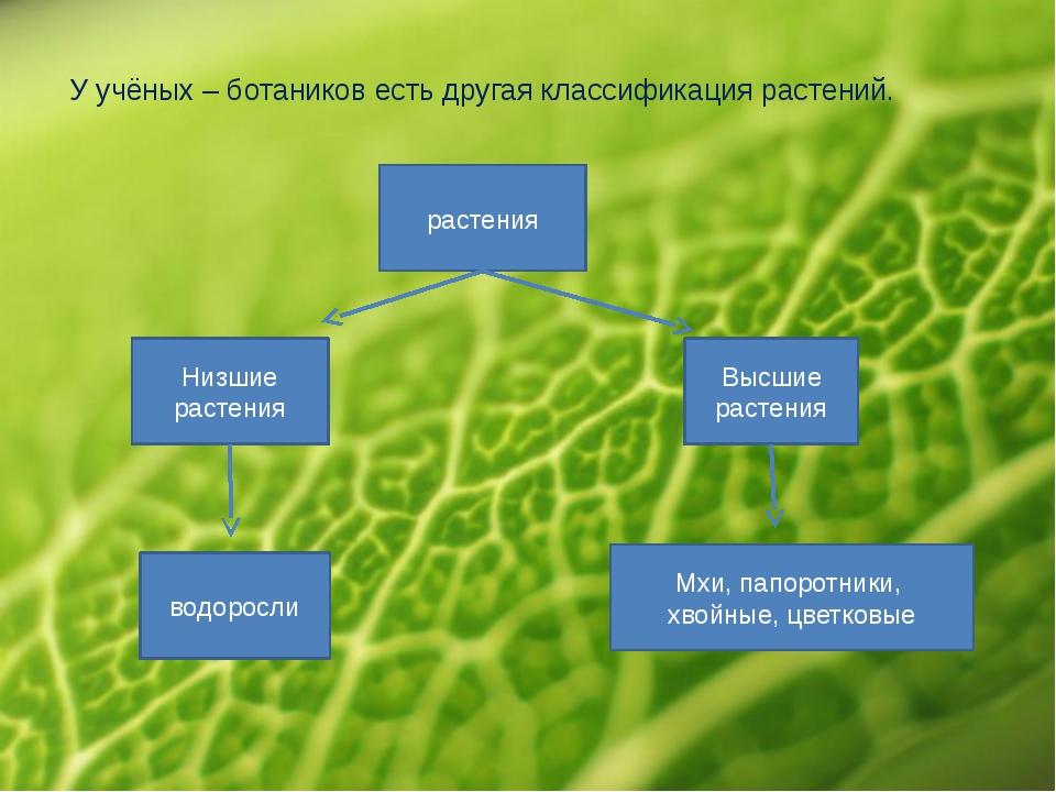 У учёных – ботаников есть другая классификация растений. растения Низшие раст...