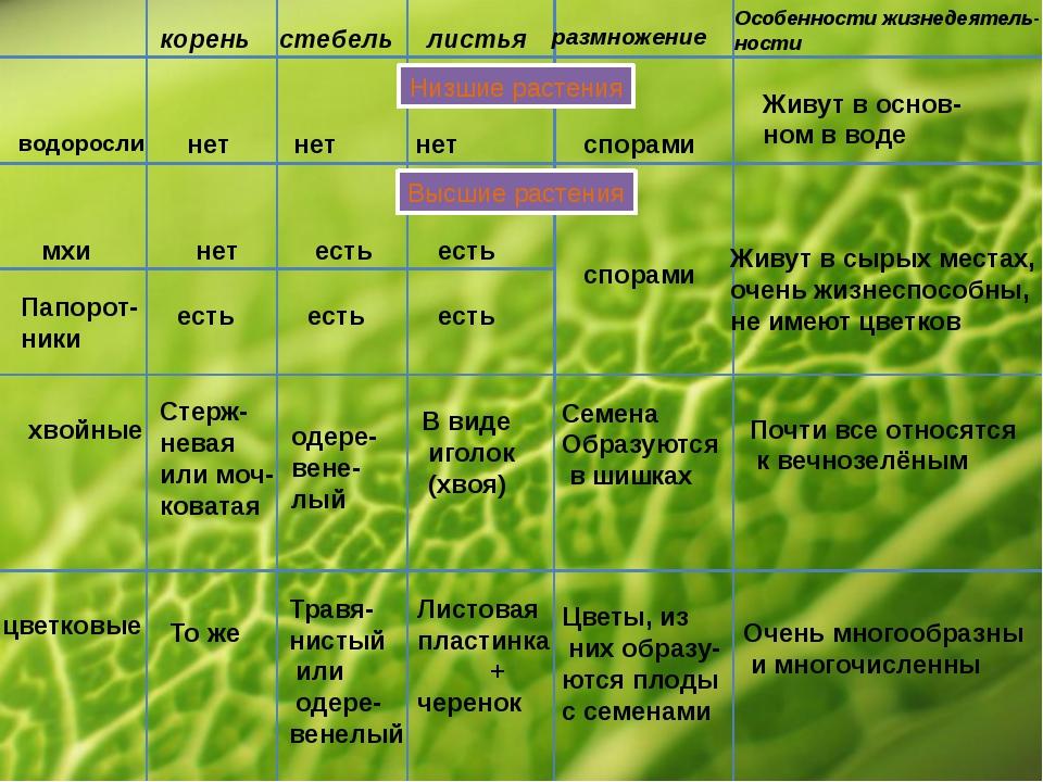 корень стебель листья размножение Особенности жизнедеятель- ности Низшие раст...