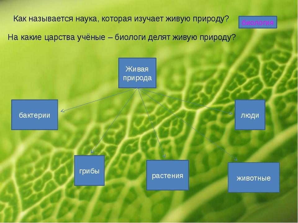 Как называется наука, которая изучает живую природу? биология На какие царств...