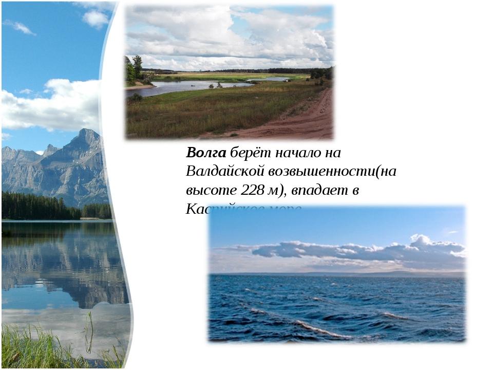 Волга берёт начало на Валдайской возвышенности(на высоте 228 м), впадает в Ка...