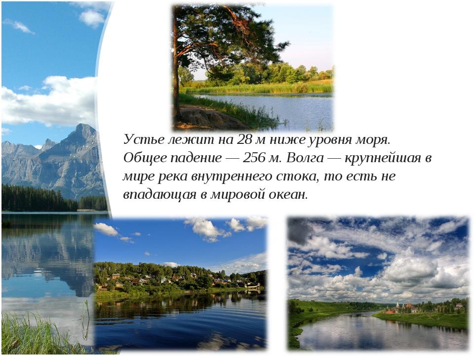 Устье лежит на 28м ниже уровня моря. Общее падение— 256м. Волга— крупнейш...