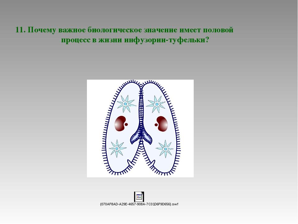 11. Почему важное биологическое значение имеет половой процесс в жизни инфуз...