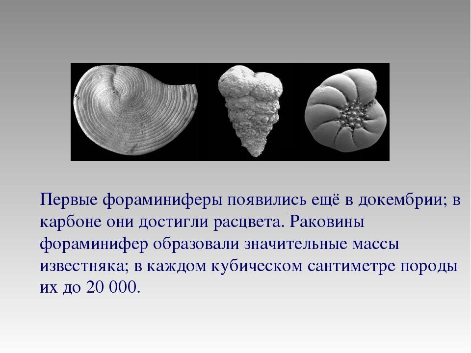 Первые фораминиферы появились ещё в докембрии; в карбоне они достигли расцвет...