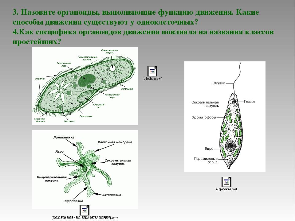 3. Назовите органоиды, выполняющие функцию движения. Какие способы движения с...