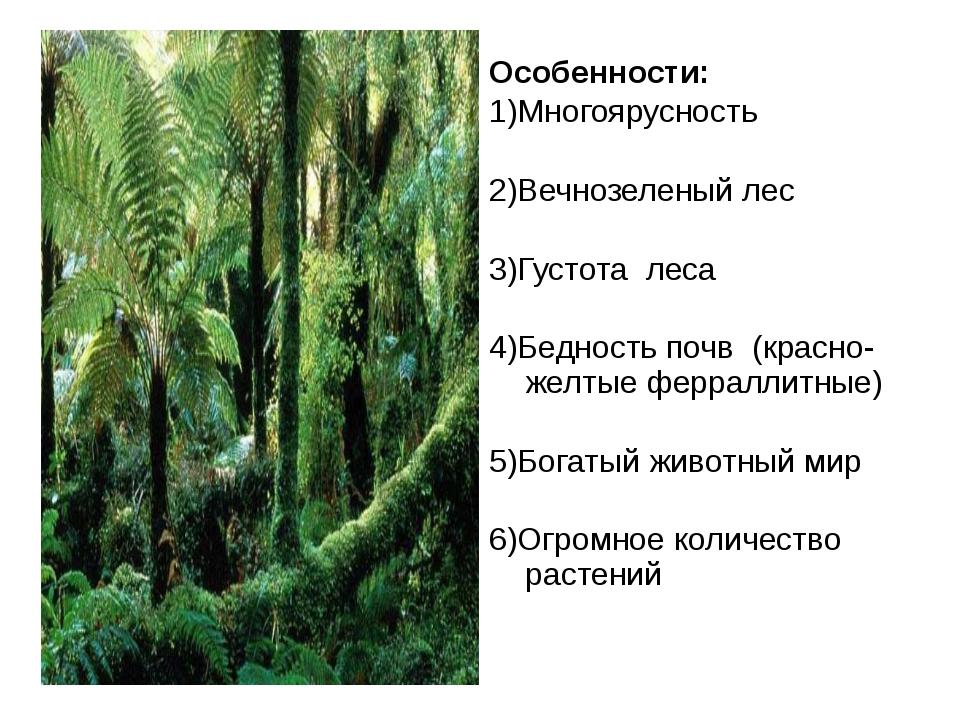 Особенности экваториального леса Особенности: 1)Многоярусность 2)Вечнозеленый...