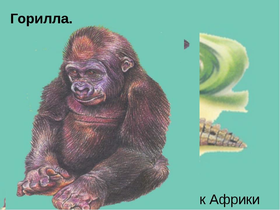 Марабу Шимпанзе Африканский слон Верблюд-дромедар Узкорылый крокодил - эндеми...