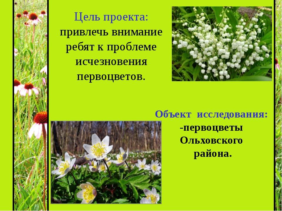Объект исследования: -первоцветы Ольховского района. Цель проекта: привлечь...