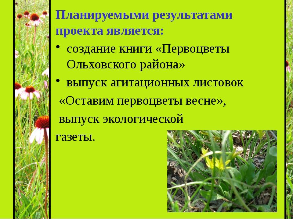 Планируемыми результатами проекта является: создание книги «Первоцветы Ольхов...
