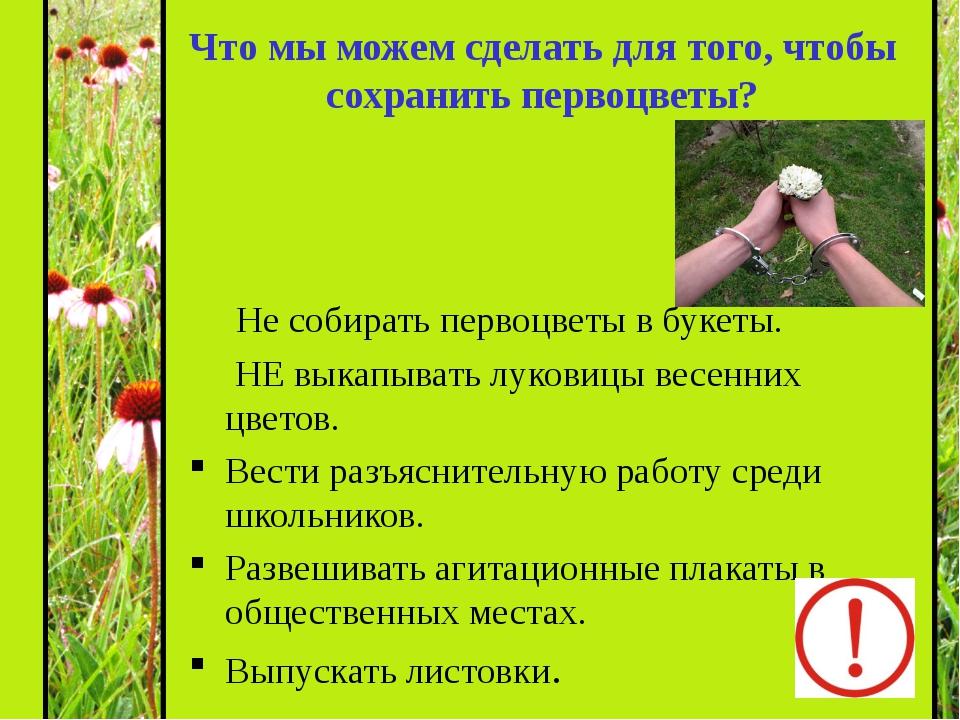 Не собирать первоцветы в букеты. НЕ выкапывать луковицы весенних цветов. Вес...