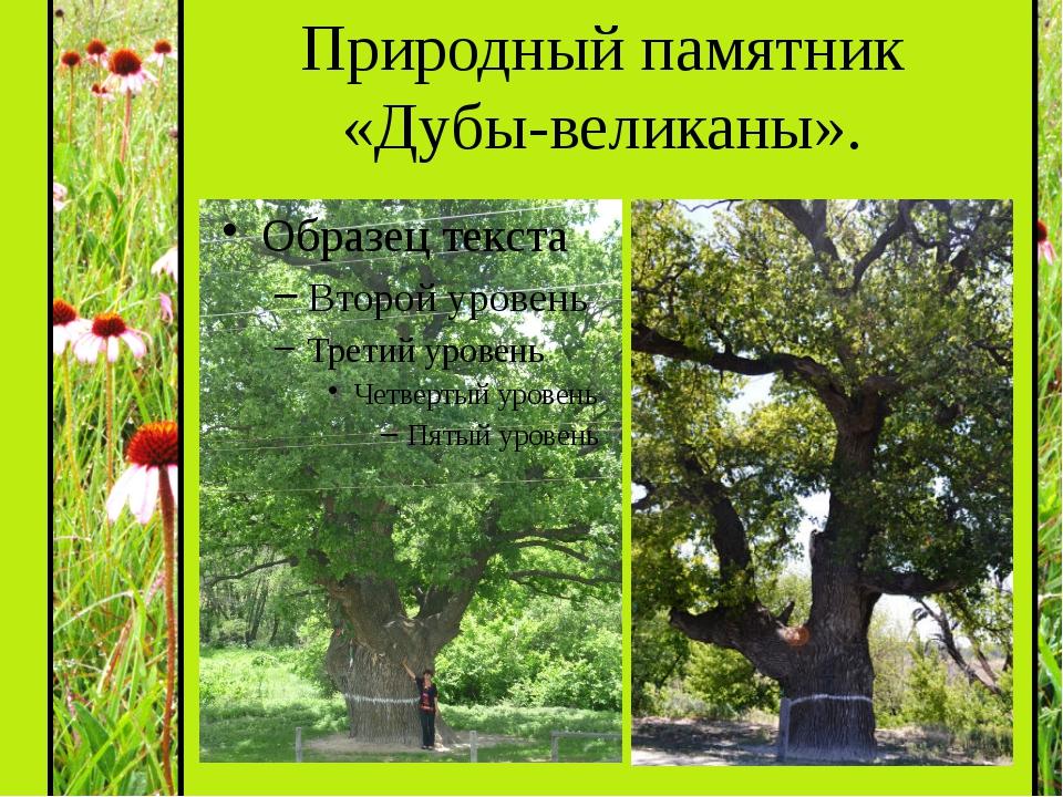 Природный памятник «Дубы-великаны».