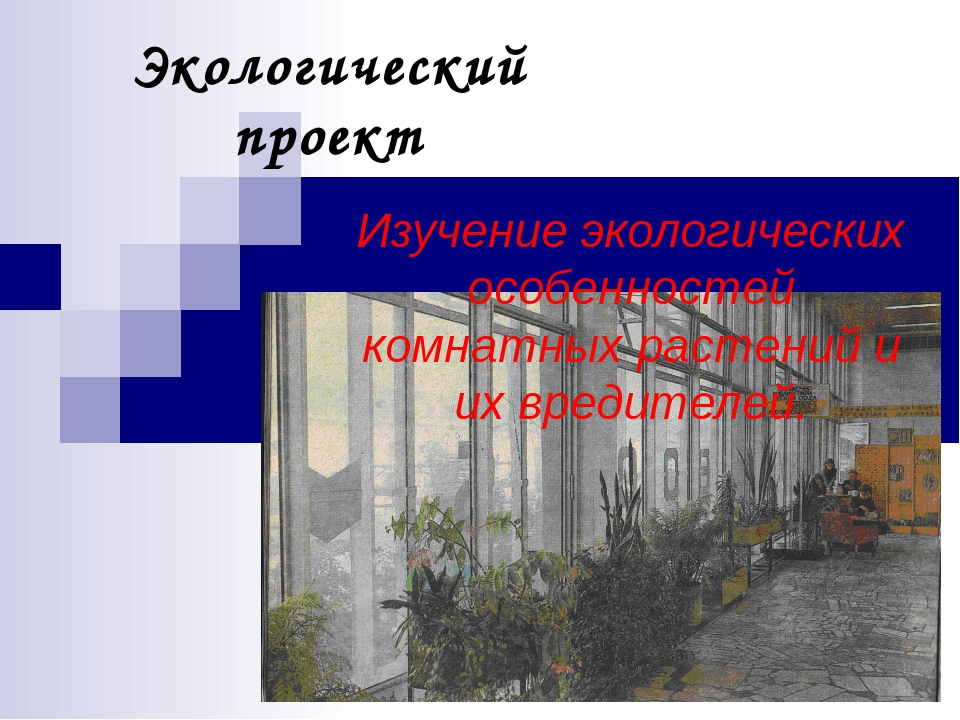 Экологический проект Изучение экологических особенностей комнатных растений и...