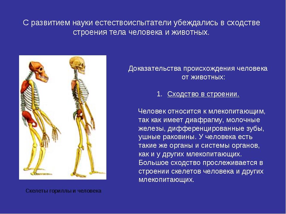 С развитием науки естествоиспытатели убеждались в сходстве строения тела чело...