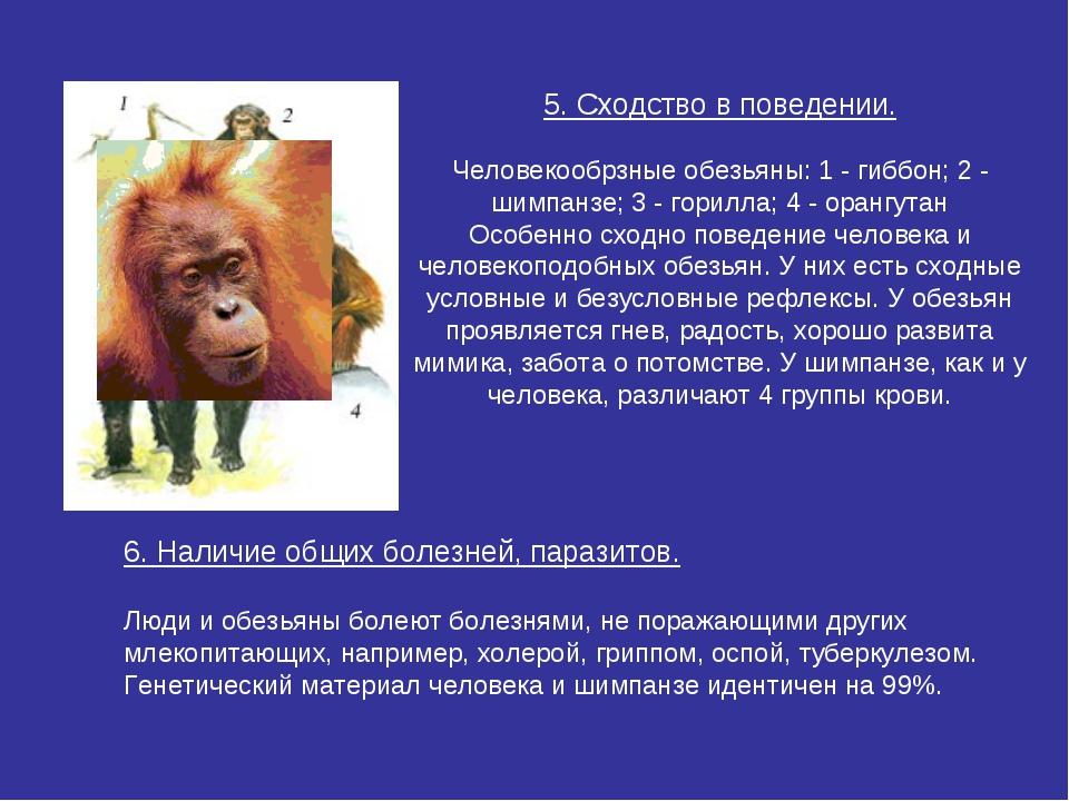 5. Сходство в поведении.  Человекообрзные обезьяны: 1 - гиббон; 2 - шимпанзе...