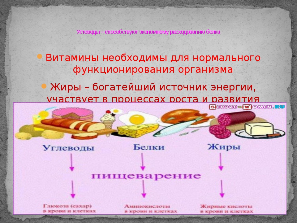 Витамины необходимы для нормального функционирования организма Жиры – богатей...