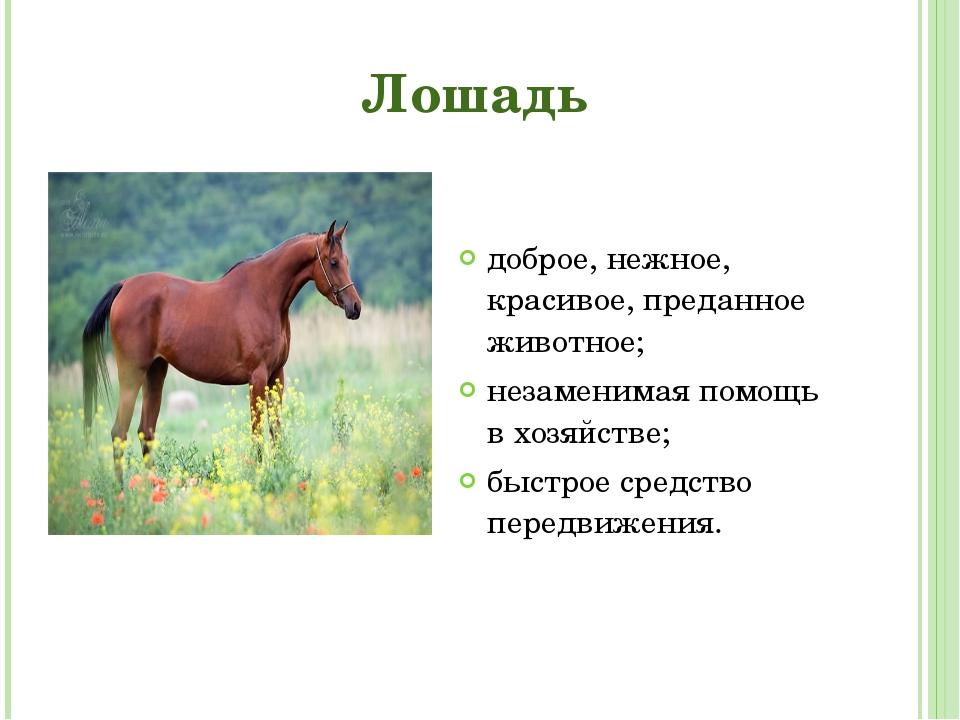 доброе, нежное, красивое, преданное животное; доброе, нежное, красивое, пред...