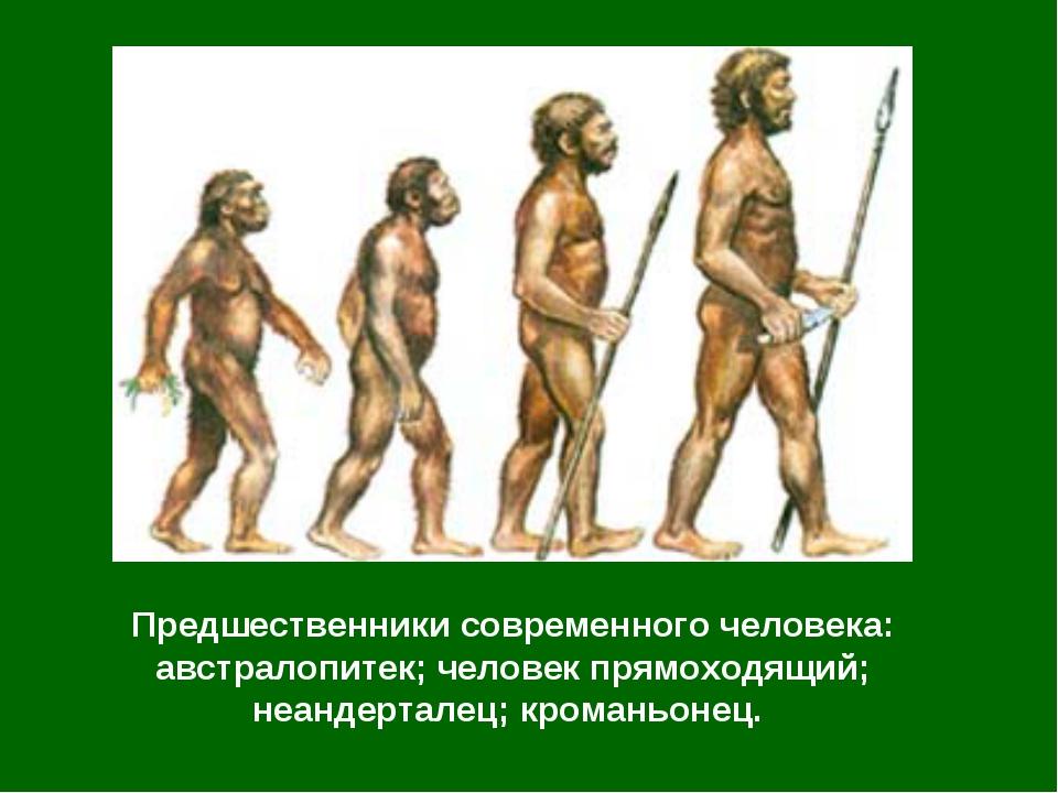 Предшественники современного человека: австралопитек; человек прямоходящий; н...
