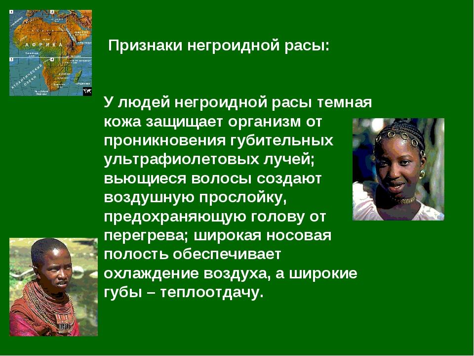 Признаки негроидной расы: У людей негроидной расы темная кожа защищает орган...