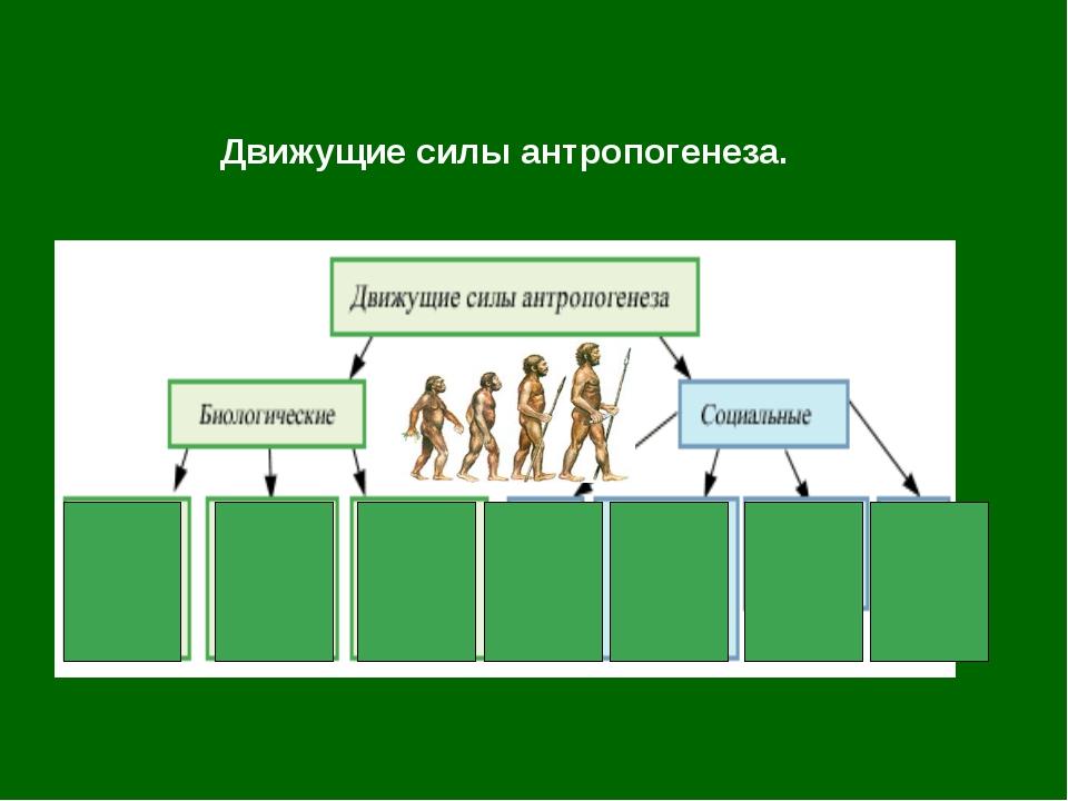 Движущие силы антропогенеза.