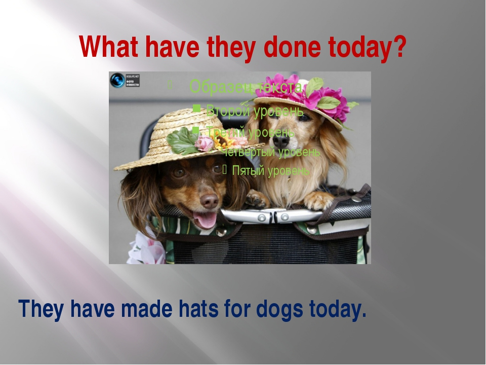 What have they done today? They have made hats for dogs today.