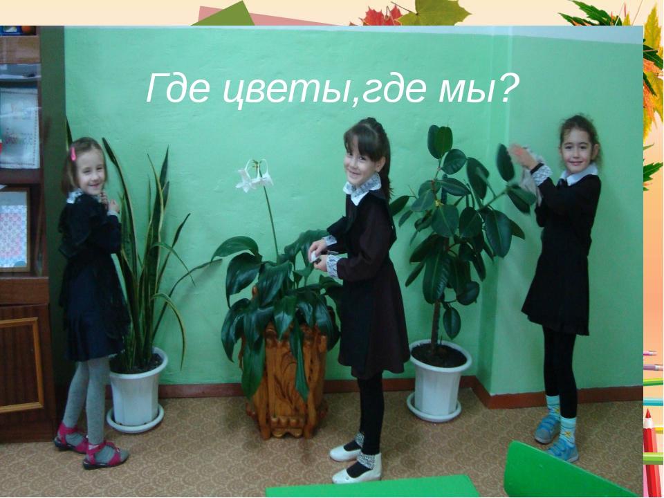 Где цветы,где мы?