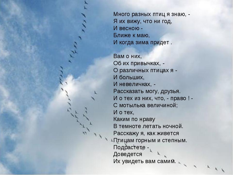 Много разных птиц я знаю, - Яих вижу, что ни год, И весною - Ближе к маю, И...