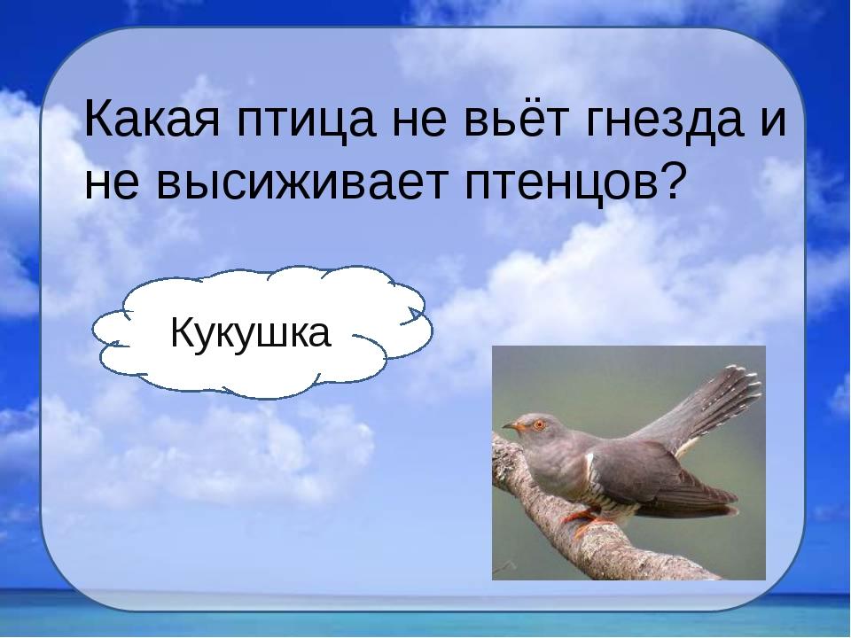 Какая птица не вьёт гнезда и не высиживает птенцов? Кукушка