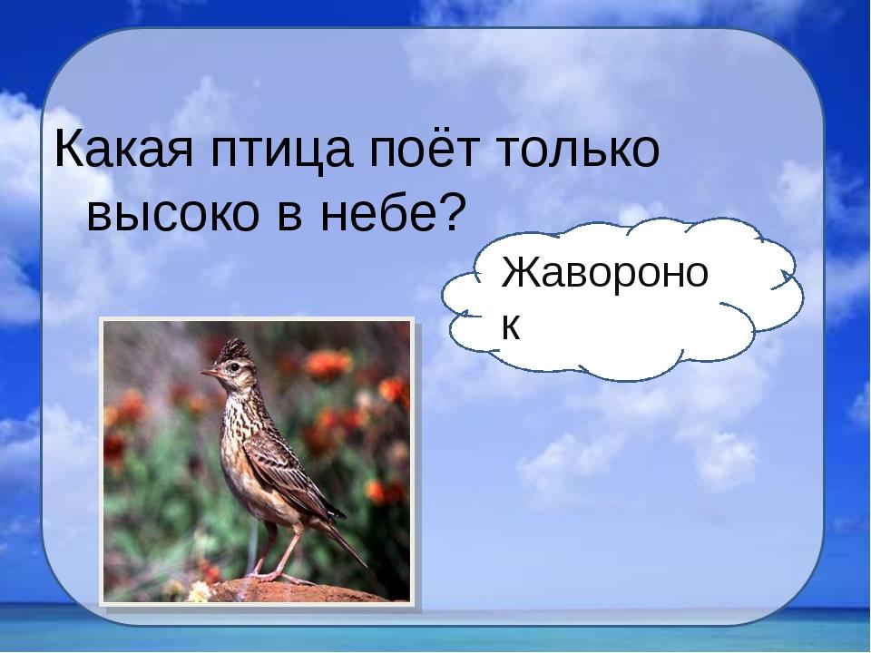 Какая птица поёт только высоко в небе? Жаворонок