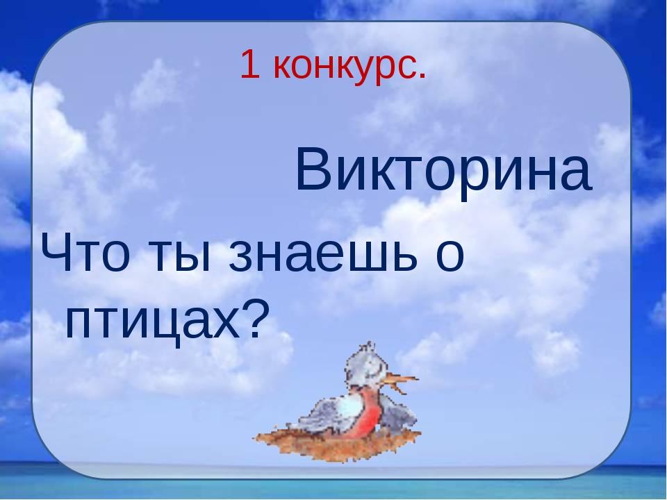 1 конкурс. Викторина Что ты знаешь о птицах?