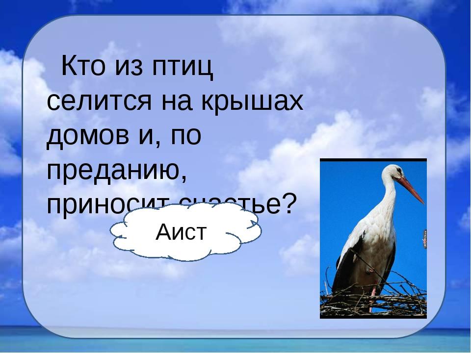Кто из птиц селится на крышах домов и, по преданию, приносит счастье? Аист