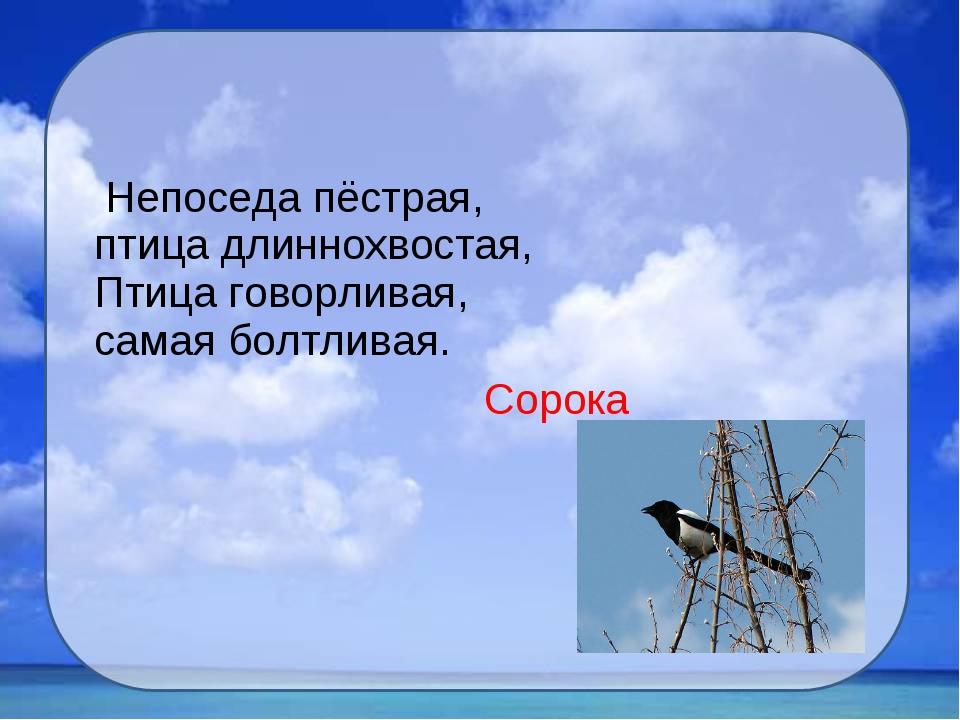 Непоседа пёстрая, птица длиннохвостая, Птица говорливая, самая болтливая. Со...