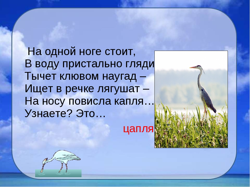 На одной ноге стоит, В воду пристально глядит. Тычет клювом наугад – Ищет в...