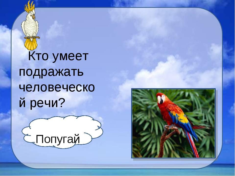 Кто умеет подражать человеческой речи? Попугай