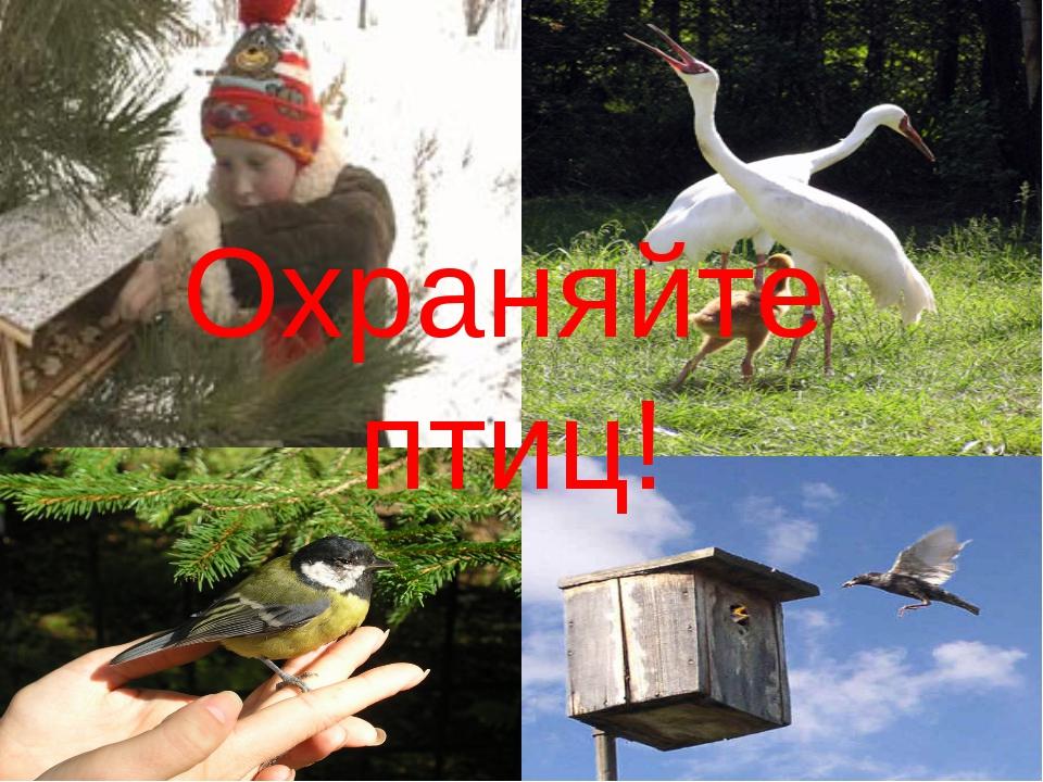 Охраняйте птиц!