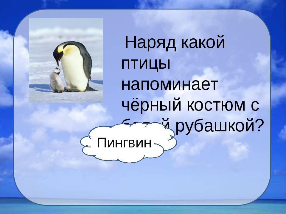 Наряд какой птицы напоминает чёрный костюм с белой рубашкой? Пингвин