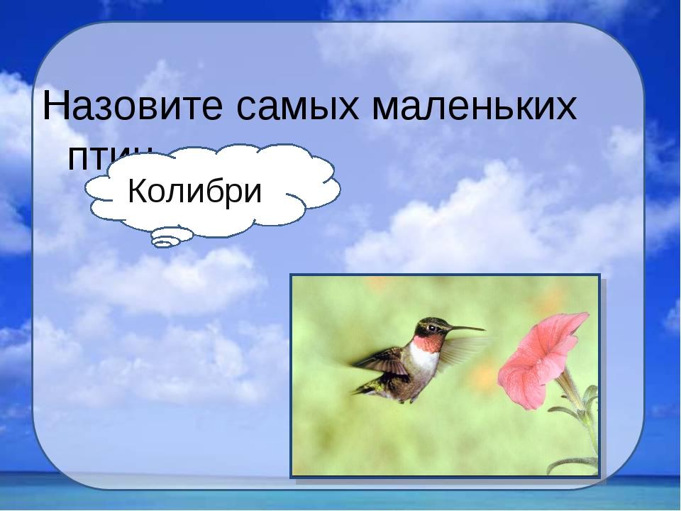 Назовите самых маленьких птиц. Колибри