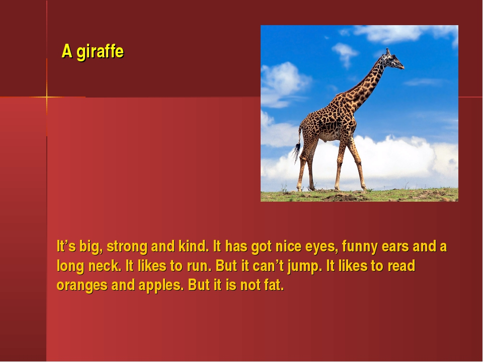 It's big, strong and kind. It has got nice eyes, funny ears and a long neck....