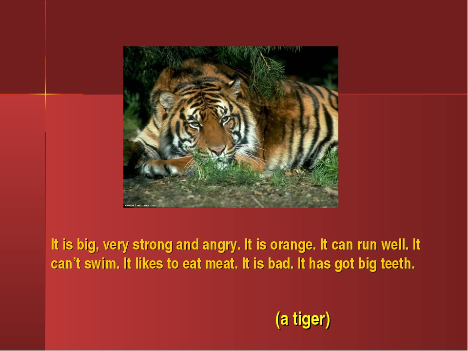 It is big, very strong and angry. It is orange. It can run well. It can't swi...